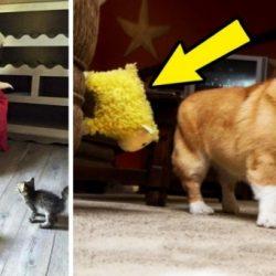 15 kutya, akit halálra rémít valami nevetséges dolog
