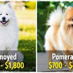 11 fenséges kutyafajta, amelyek egy vagyonba kerülnek