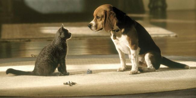 Kutyák és macskák /Cats and Dogs, 2001/
