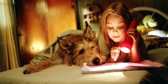 Lelkipásztor-kutya /Because of Winn-Dixie, 2005/