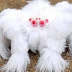 Nem fogod elhinni, de ez a 15 bizarr teremtmény létezik