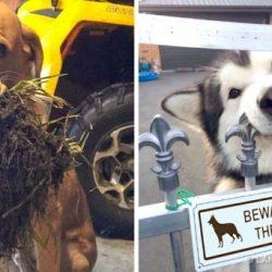 20 vicces kutya, akik mellett képtelenség komolynak maradni