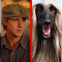12 kutya, aki megszólalásig hasonlít egy hollywoodi sztárra