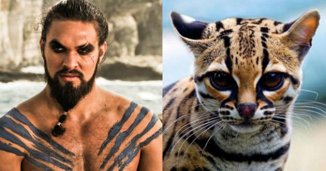 18 Trónok harca-karakter, akik sokkolóan hasonlítanak egy-egy macskafélére