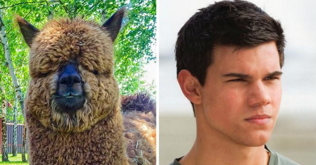 18 állat, akik megdöbbentően hasonlítanak hírességekre