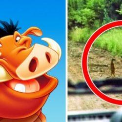 10 Disney-karakter, aki a szemünk láttára kelt életre
