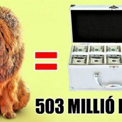 A 10 legdrágább kutya a világon, amelyek hihetetlenül bájosak